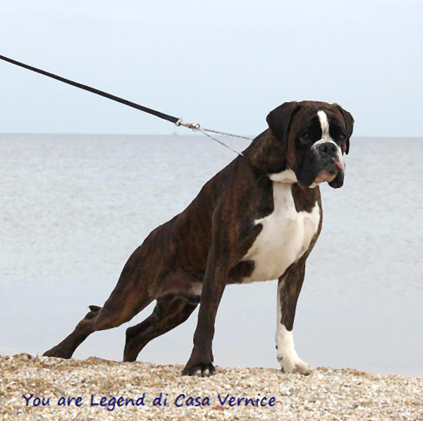 Fci world dog show 2012 folio verso for Boxer jardin de passiflore